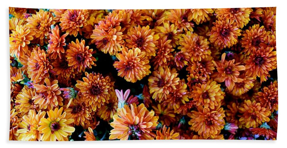 Fall Hand Towel featuring the photograph Mums The Word by Bri Lou