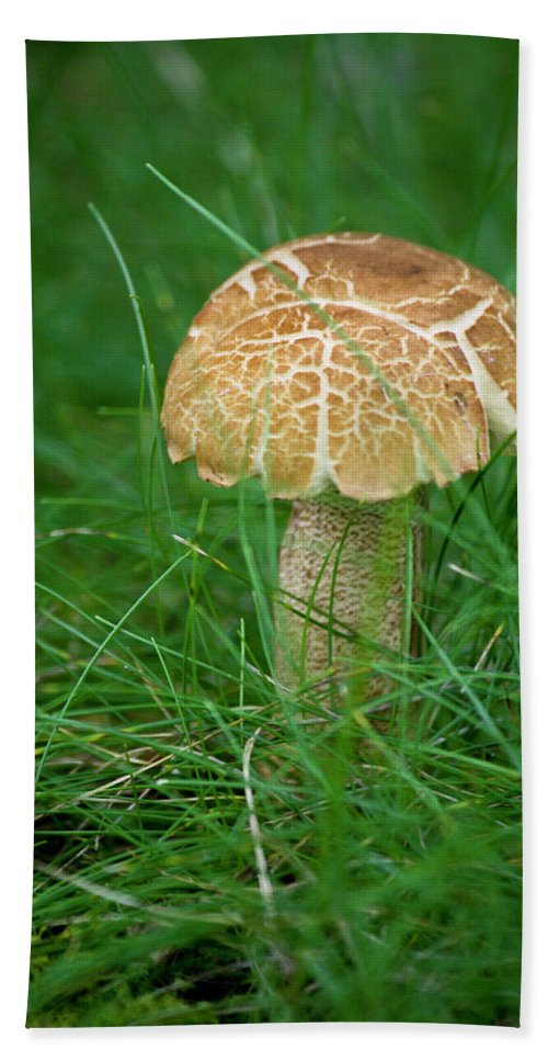 Fungus Hand Towel featuring the photograph Mushroom In The Grass by Teresa Mucha