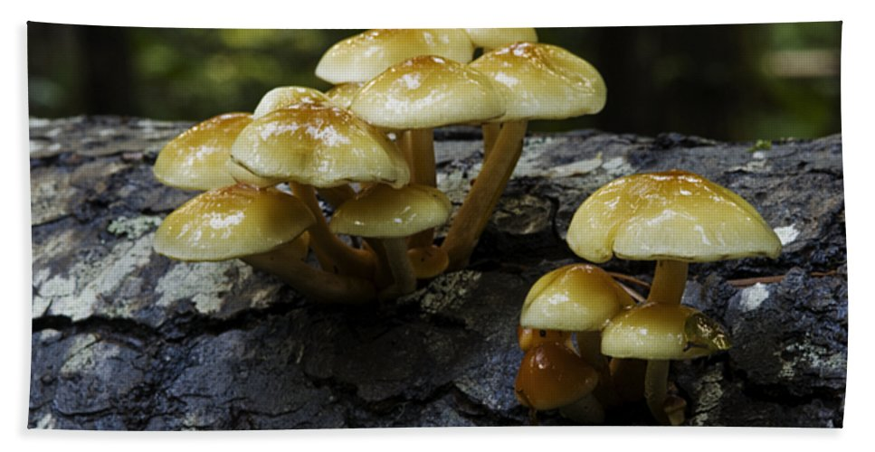 British Columbia Bath Sheet featuring the photograph Mushrooms by Bob Christopher