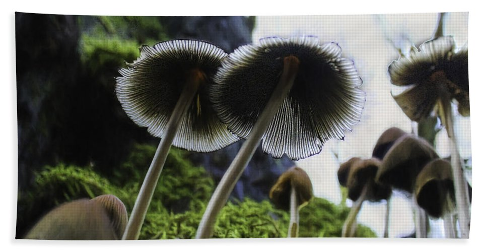 Mushrooms Hand Towel featuring the photograph Mushrooms From Below by Lorraine Baum