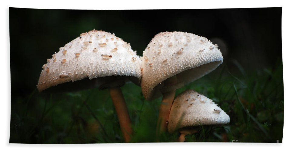 Mushrooms Bath Towel featuring the photograph Mushrooms In The Morning by Robert Meanor