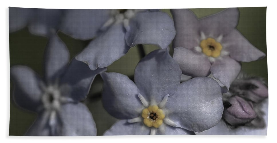 Forget Me Not Hand Towel featuring the photograph Muted Forget Me Not by Mo Barton