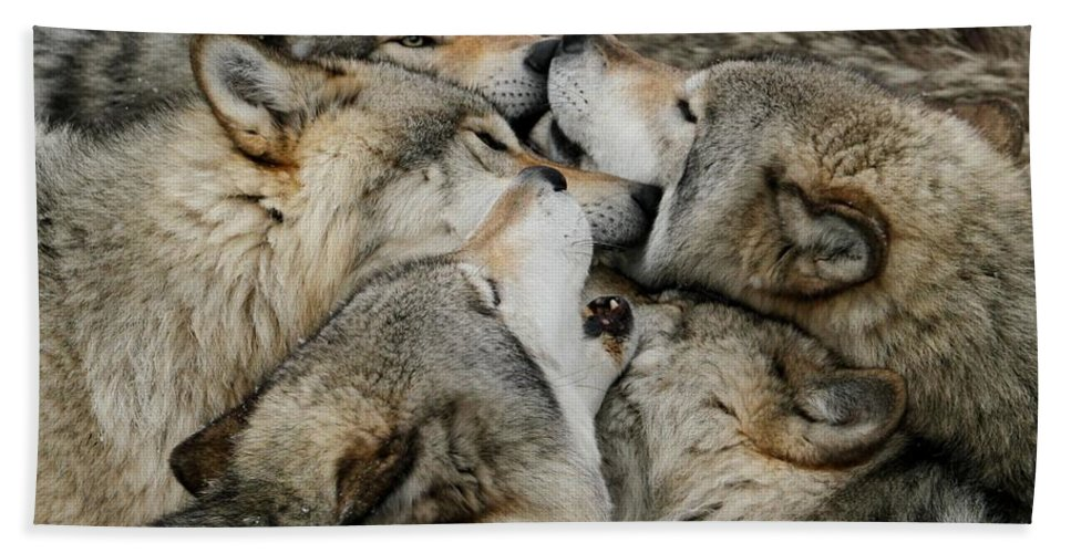 Timber Wolf Hand Towel featuring the photograph Muzzle Nuzzle by Heather King