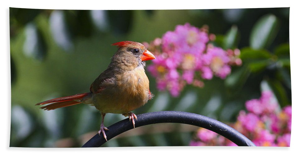Bird Bath Sheet featuring the photograph My Good Side by Deborah Benoit