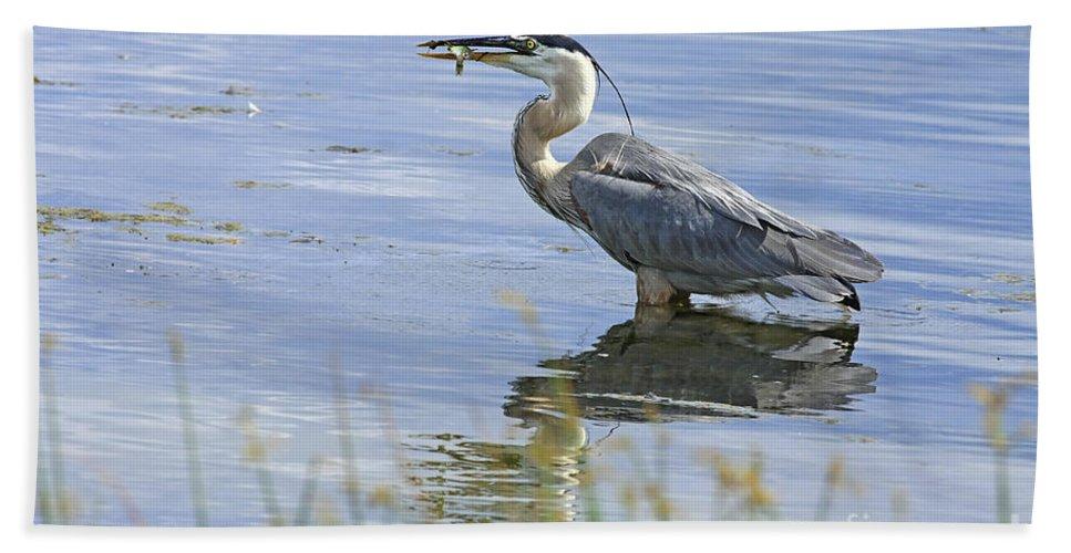 Heron Bath Sheet featuring the photograph My Late Afternoon Treat by Deborah Benoit