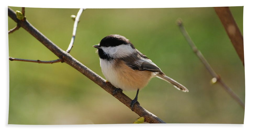 Chickadee Hand Towel featuring the photograph My Little Chickadee by Lori Tambakis