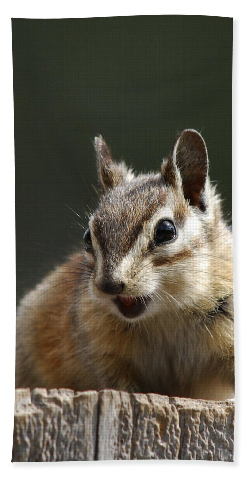 Squirrel Bath Sheet featuring the photograph My Name Is Alvin by Donna Blackhall