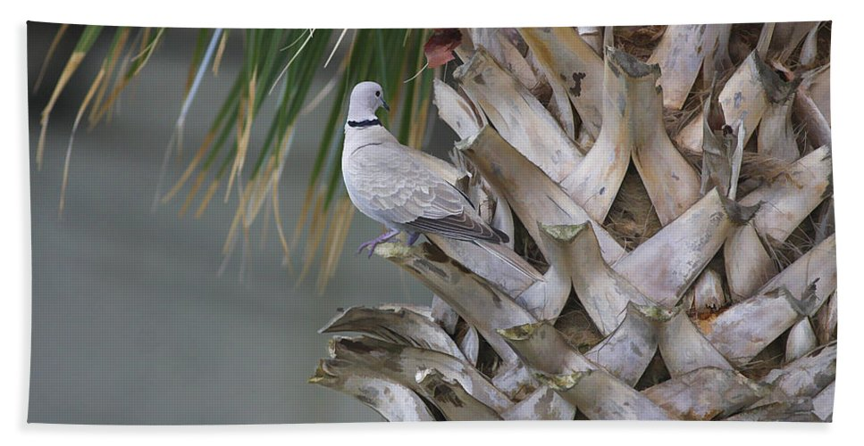 Palm Hand Towel featuring the photograph My Own Palm Tree by Deborah Benoit