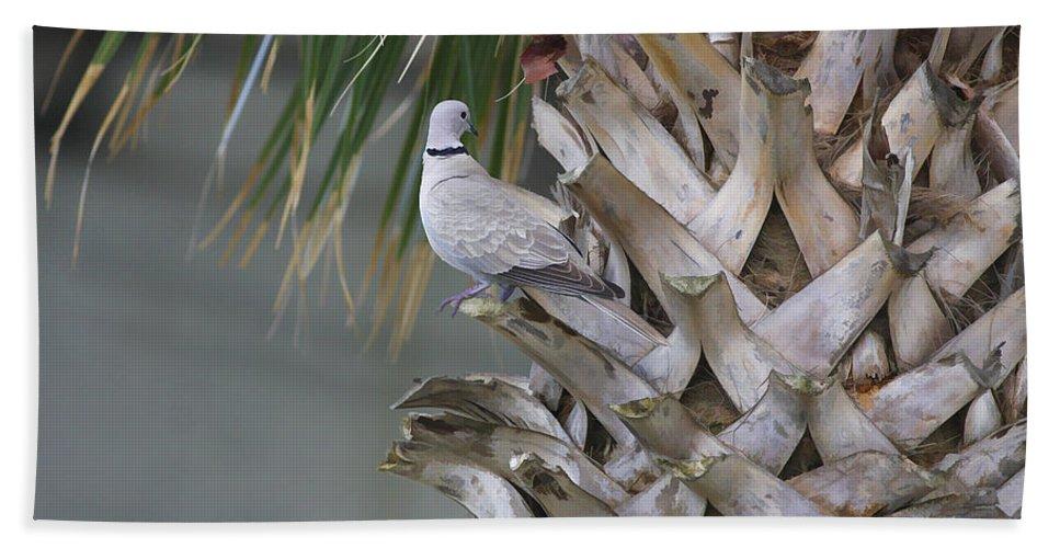Palm Bath Sheet featuring the photograph My Own Palm Tree by Deborah Benoit
