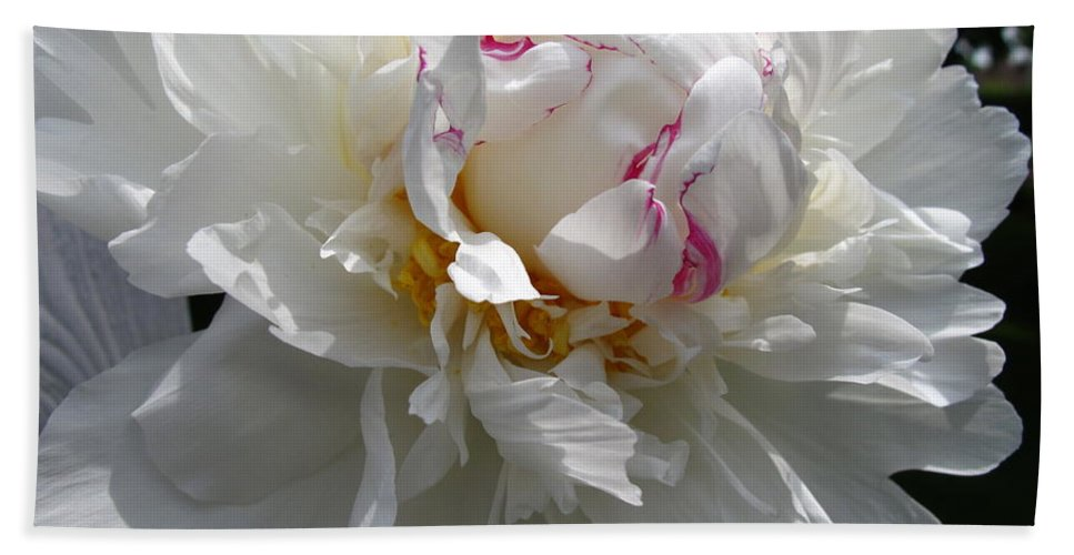 Peony Bath Sheet featuring the photograph My Peony by Mary Ellen Mueller Legault
