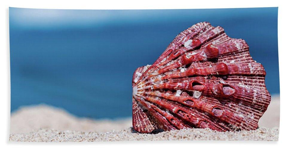 Evgeniya Lystsova Bath Sheet featuring the photograph My Shell by Evgeniya Lystsova
