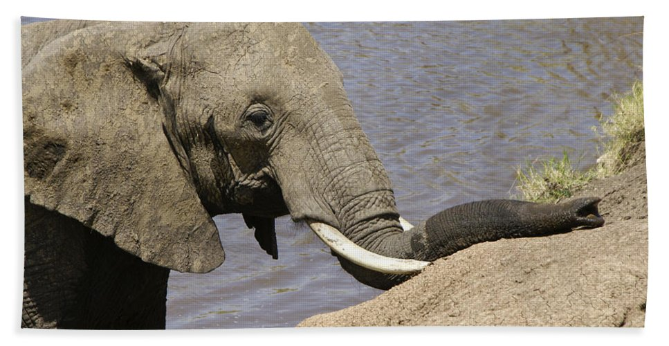 Africa Hand Towel featuring the photograph My Trunk Needs Drying Out by Michele Burgess
