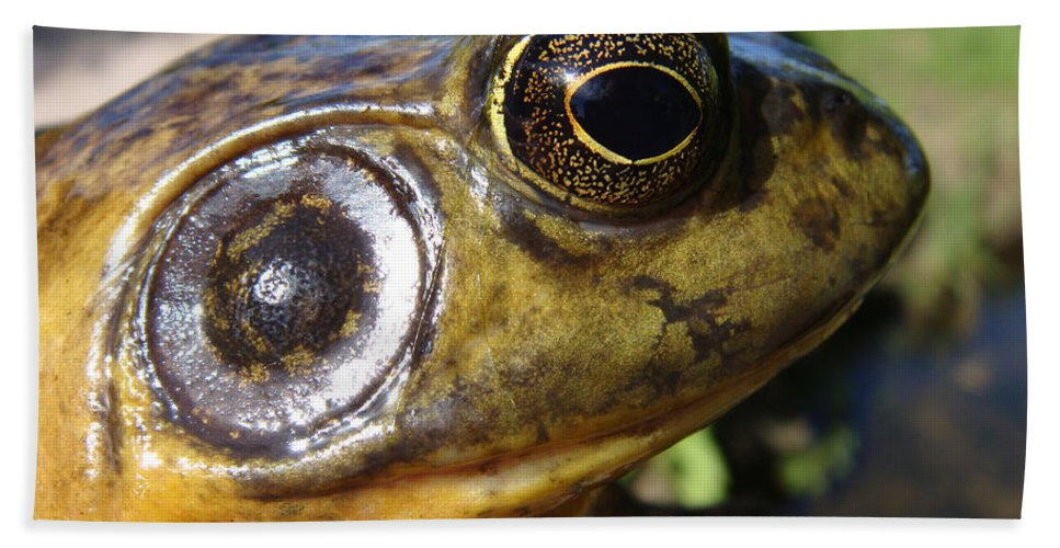 Frog Bath Sheet featuring the photograph My What Big Eyes You Have by Donna Blackhall