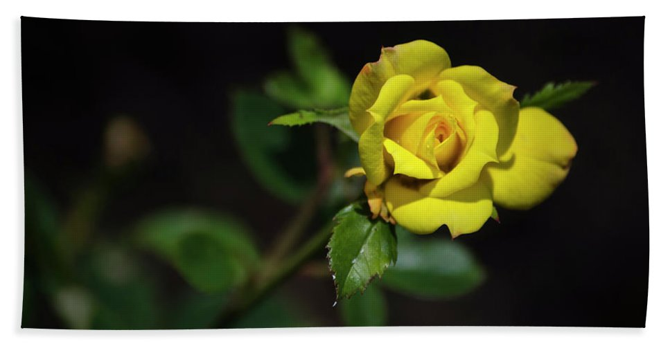 Rose Hand Towel featuring the photograph Mystic Yellow Rose by Christina Rollo