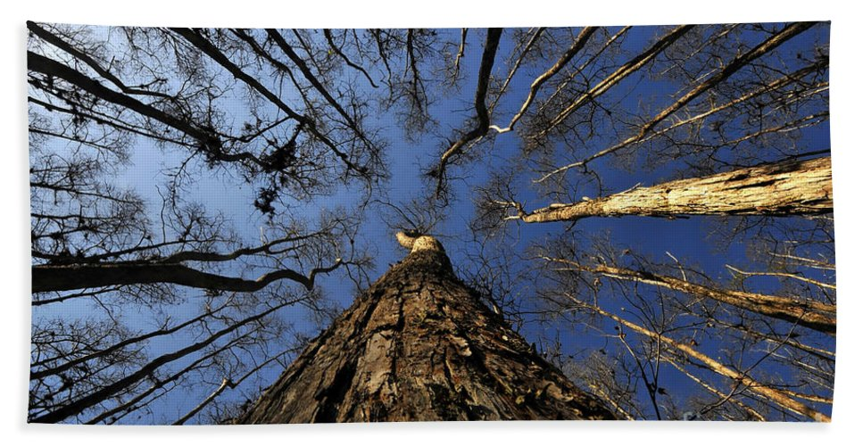 Bald Cypress Trees Hand Towel featuring the photograph Naked Cypress by David Lee Thompson