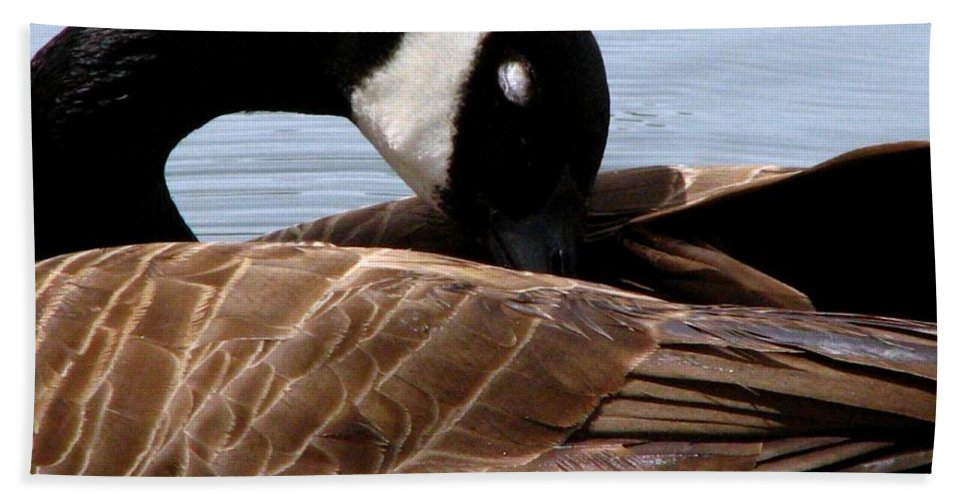 Geese Bath Sheet featuring the photograph Nap Time 2 by J M Farris Photography