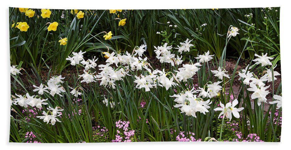 Flower Hand Towel featuring the photograph Narcissus And Daffodils In A Spring Flowerbed by Louise Heusinkveld