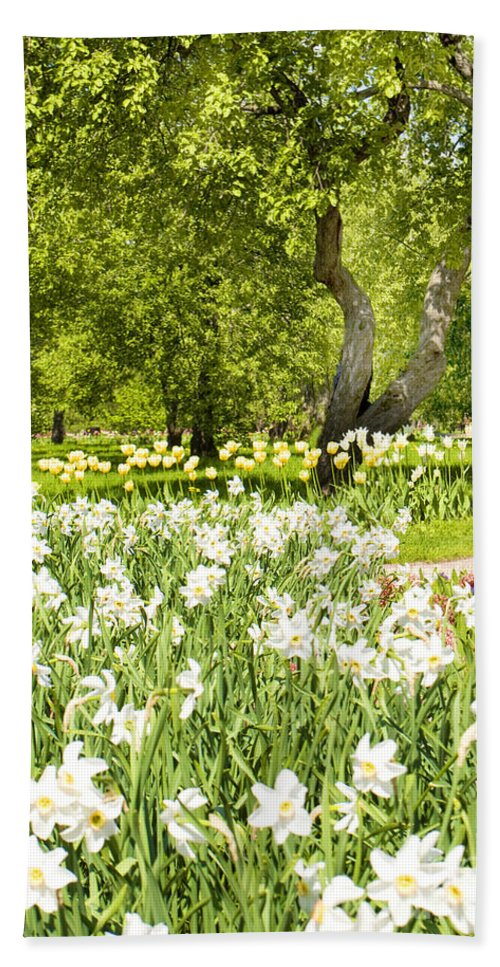 Landscape Hand Towel featuring the photograph Narcissus In Apple Garden by Irina Afonskaya