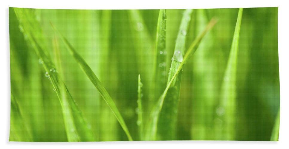 Illinois Bath Sheet featuring the photograph Native Prairie Grasses by Steve Gadomski