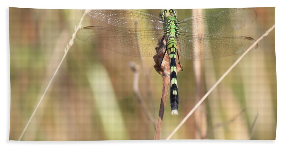 Green Dragonfly Hand Towel featuring the photograph Natural Canvas With Dragonfly by Carol Groenen