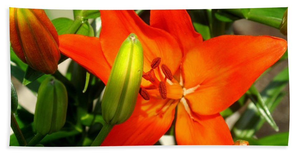 Flower Hand Towel featuring the photograph Naturally Intense by Ian MacDonald