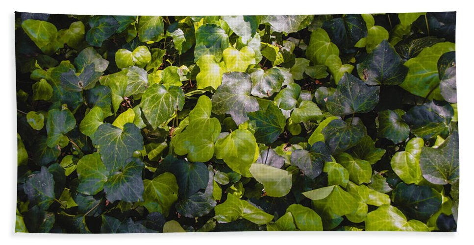 Foliage Hand Towel featuring the photograph Nature Abstract 5 by Andrea Anderegg