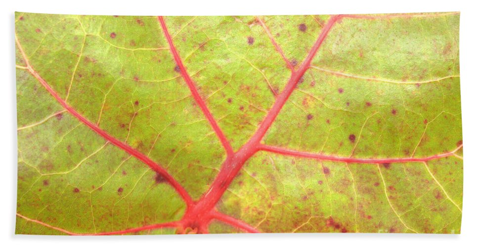 Seagrape Leaf Bath Sheet featuring the photograph Nature Abstract Sea Grape Leaf by Carol Groenen