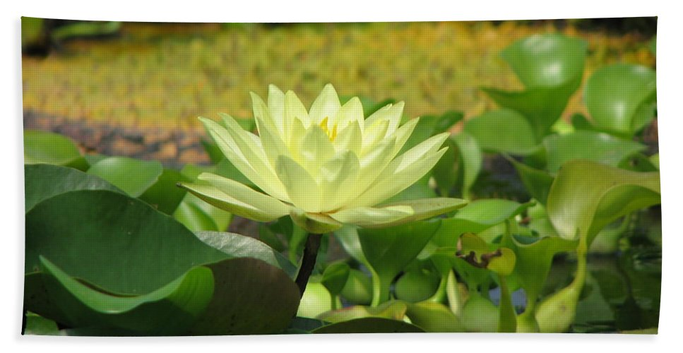 Nature Hand Towel featuring the photograph Nature by Amanda Barcon