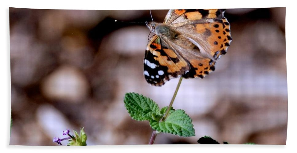 Butterfly Hand Towel featuring the photograph Nature Is A Miracle by Eric Tressler