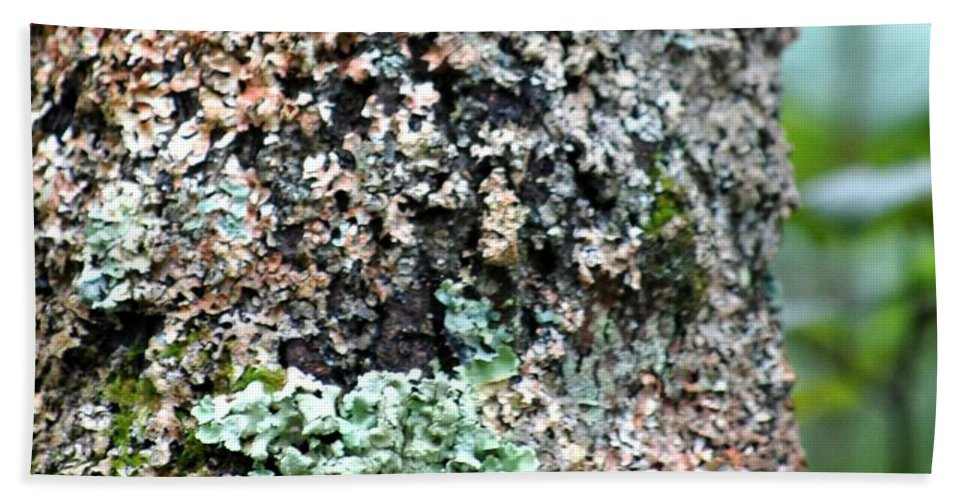 Digital Photograph Bath Towel featuring the photograph Nature Painted Tree Bark by David Lane