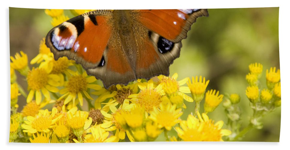 Butterfly Bath Sheet featuring the photograph Nature's Beauty by Ian Middleton