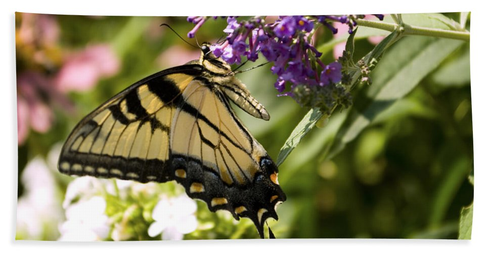 Butterfly Bath Sheet featuring the photograph Nature's Canvas by Scott Wyatt