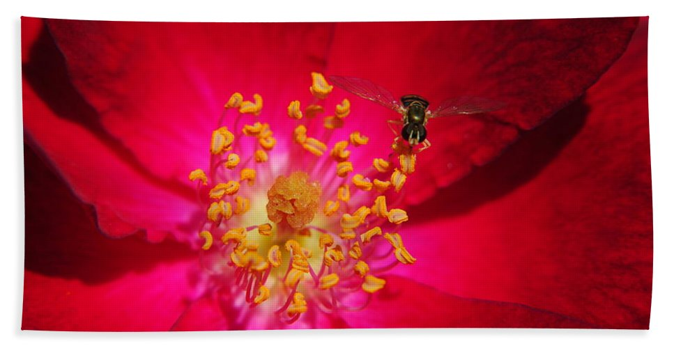 Glow Bath Sheet featuring the photograph Natures Glow by Frozen in Time Fine Art Photography