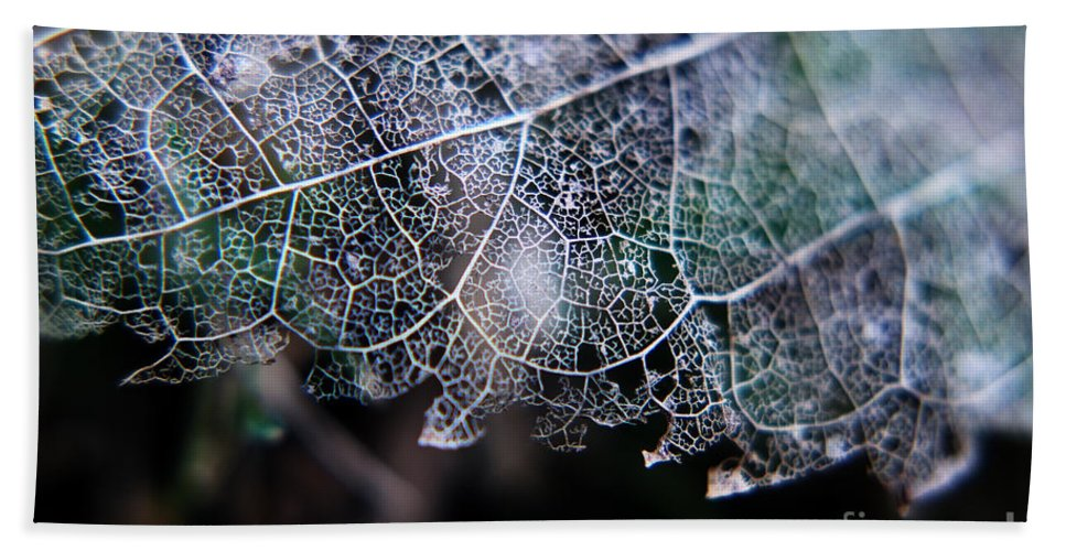 Nature's Lace Hand Towel featuring the photograph Nature's Lace by Rebecca Davis