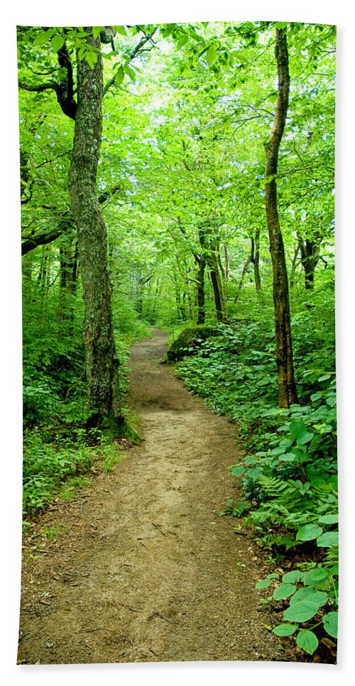 Trees Bath Sheet featuring the photograph Nature's Path by Greg Fortier