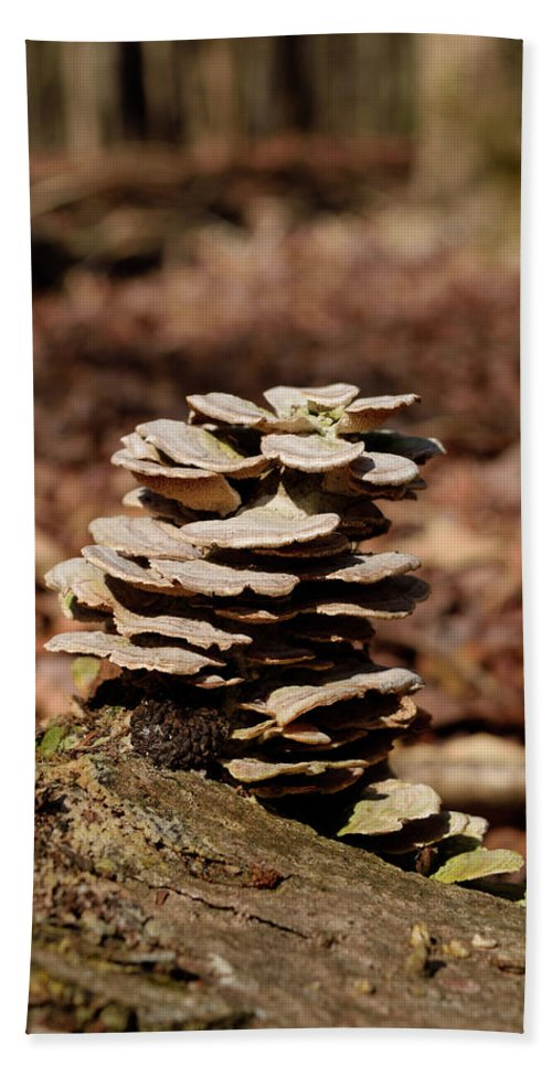Fungi Bath Sheet featuring the photograph Nature's Stack by Karen Harrison