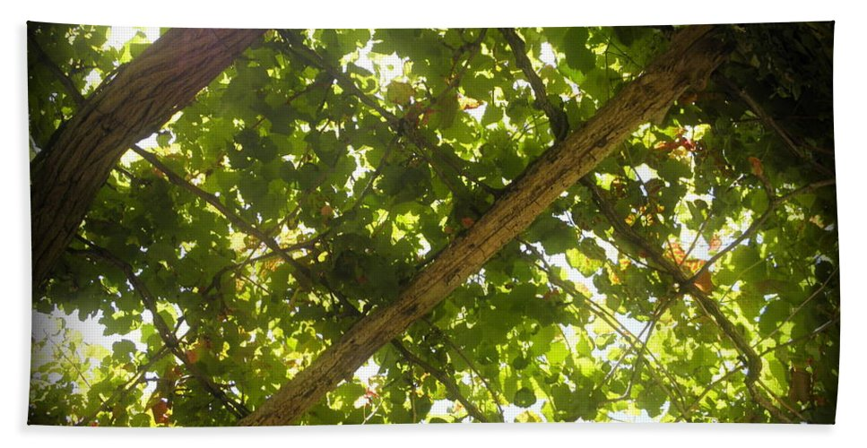 Vine Hand Towel featuring the photograph Nature's Upward View by Paul Pettingell