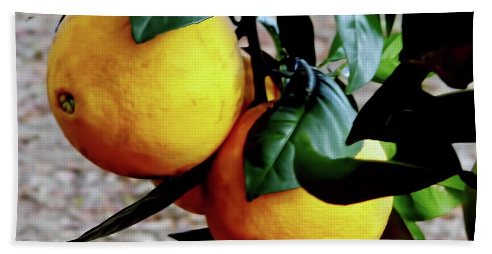 Fruit Bath Sheet featuring the photograph Naval Oranges On The Tree by D Hackett
