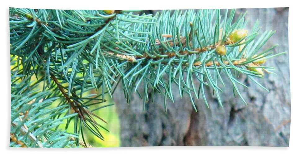 Pine Hand Towel featuring the photograph Needles by Ian MacDonald