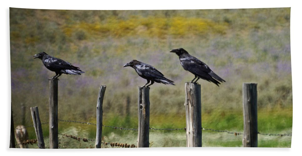 Crows Bath Sheet featuring the photograph Neighborhood Watch Crows by Heather Coen