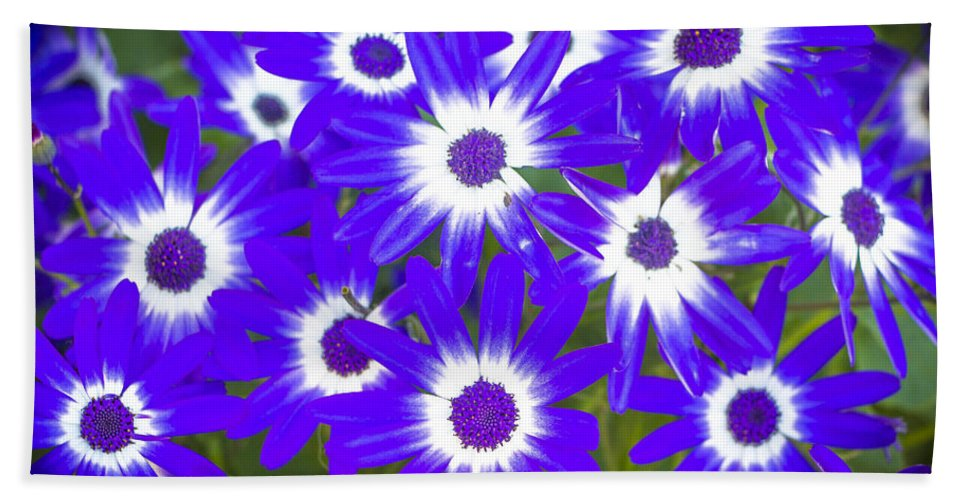 Botanicals Hand Towel featuring the photograph Neon Purple Cineraria by Venetia Featherstone-Witty