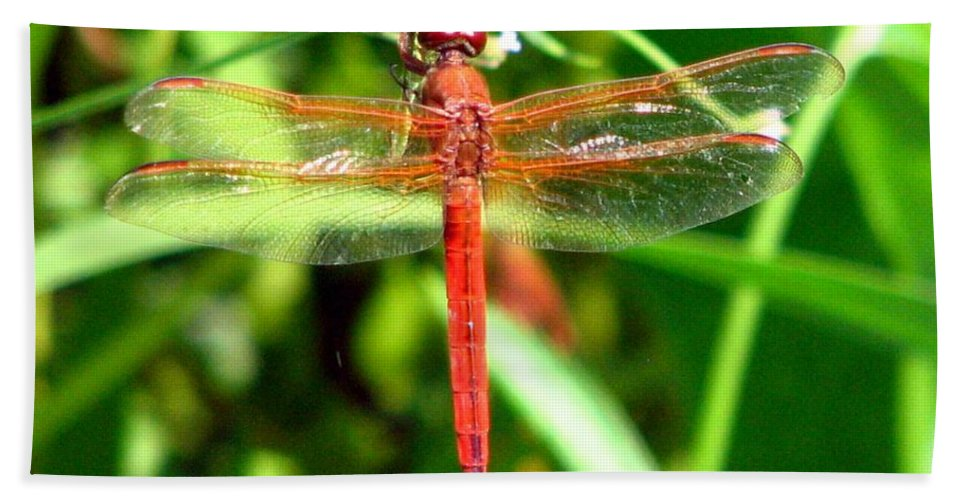 Dragonfly Hand Towel featuring the photograph Neon Skimmer 1 by J M Farris Photography