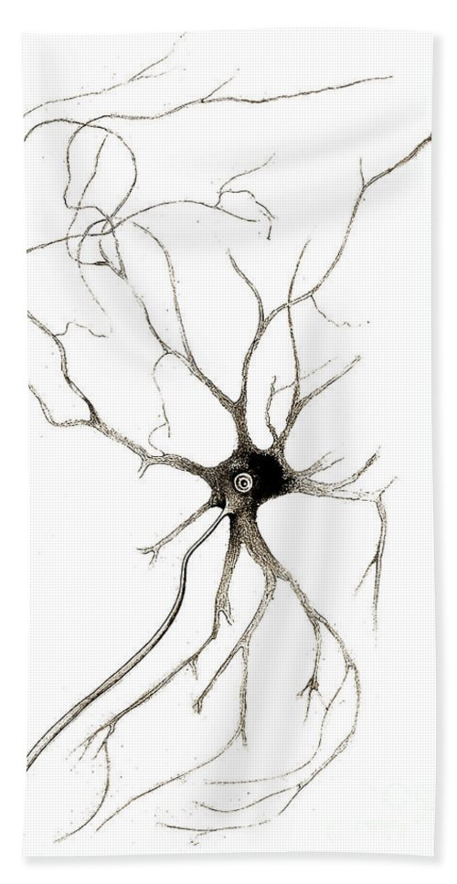 Historic Hand Towel featuring the photograph Nerve Cell From Spinal Cord, Deiters by Wellcome Images
