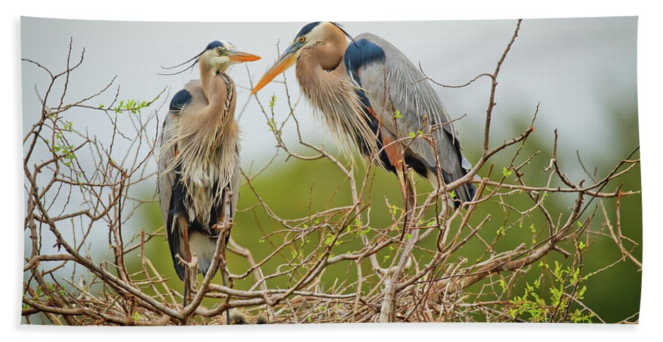 Blue Herons Hand Towel featuring the photograph Nesting Blue's by Dennis Goodman