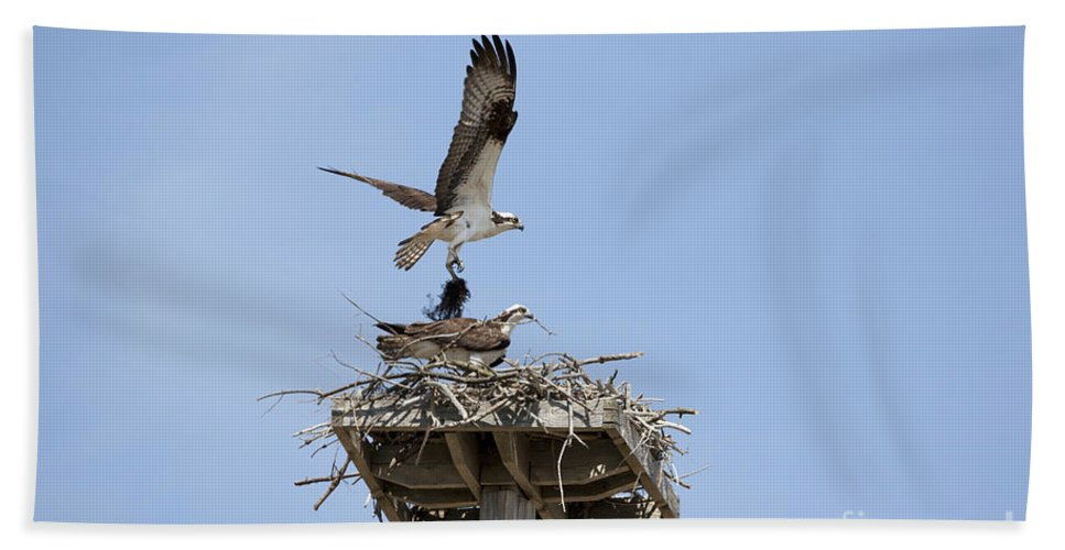 Osprey Bath Towel featuring the photograph Nesting Osprey In New England by Erin Paul Donovan