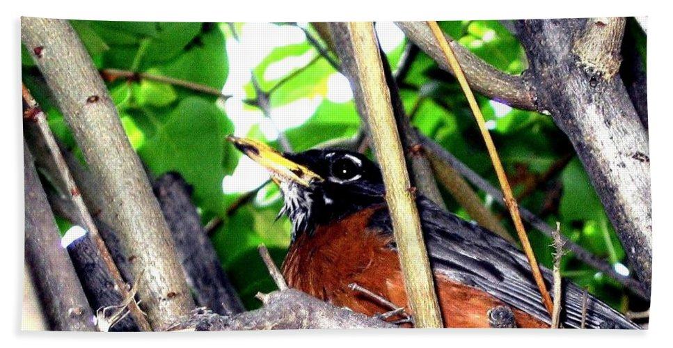 Robin Bath Sheet featuring the photograph Nesting Robin by Will Borden
