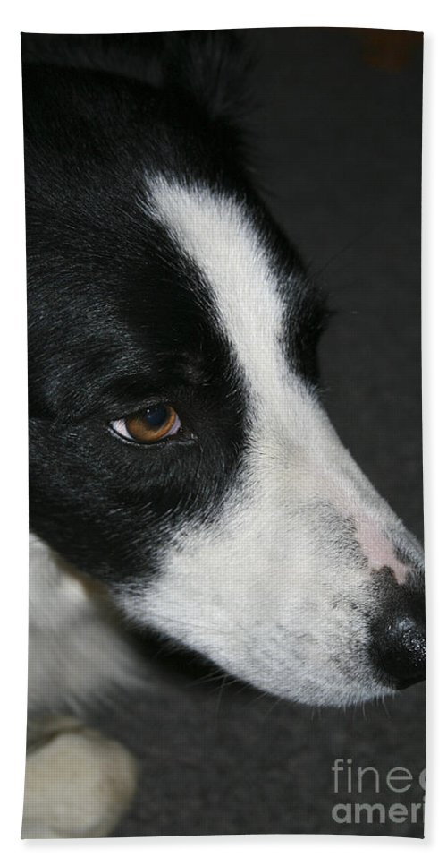 Dog Bath Sheet featuring the photograph New Dog Friend by Deborah Benoit