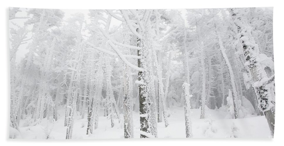 Snow Covered Bath Sheet featuring the photograph New England - Snow Covered Forest by Erin Paul Donovan