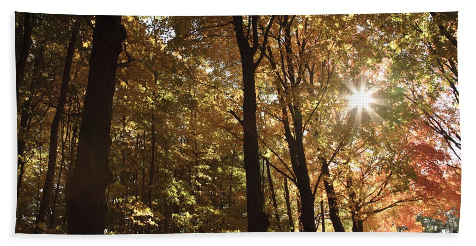 Forest Canopy Bath Sheet featuring the photograph New England Autumn Forest by Erin Paul Donovan