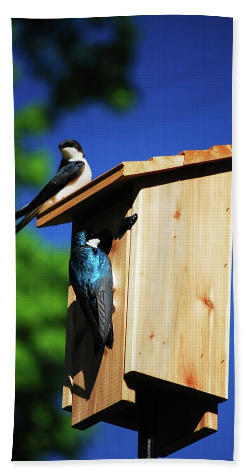 Tree Swallows Hand Towel featuring the photograph New Home Inspection by Lori Tambakis